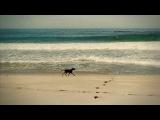 Отличный клип про Лето...